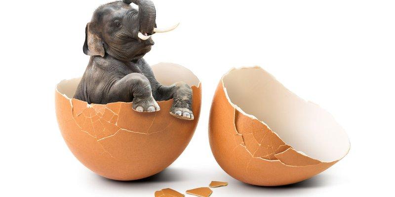 PR_elephant_egg.jpg